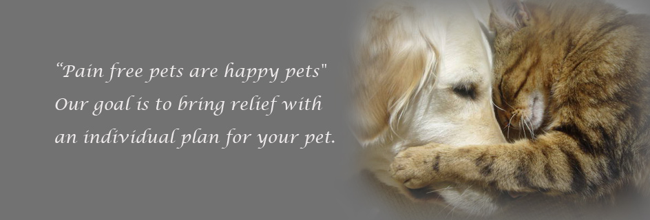Pain Free pets are happy pets