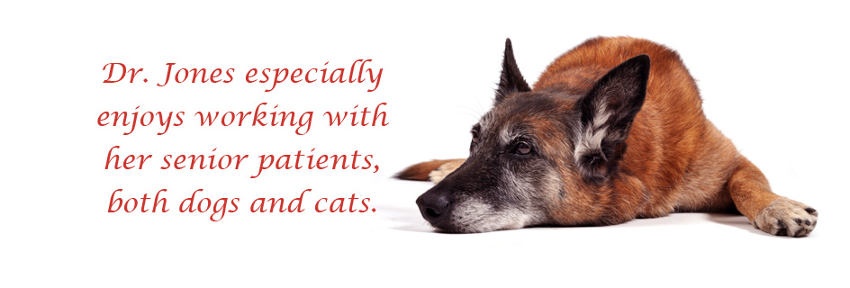Senior pets, cats and dogs