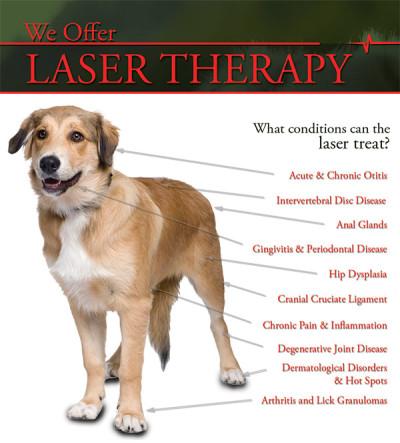 cold-laser-pet-pain