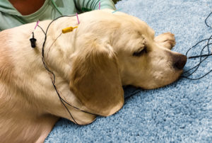 Help Companion Animals Find Pain Relief Asheville Animal